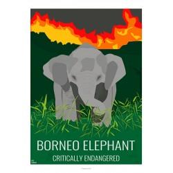 BORNEO ELEPHANT - Wild Animal - Educational Board - Poster Retro Vintage - Art Gallery - Deco