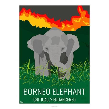 Elephant nain de Borneo - Animaux Sauvages - Planche Pédagogique  - Affiche Rétro Ancienne - Art Galerie  - Full   Bonjour l'aff