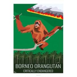 BORNEO ORANGUTAN - Wildlife - Educational Board