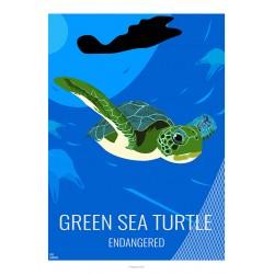 GREEN TURTLE - Wild Animal - Educational Board - Poster Retro Vintage - Art Gallery - Deco