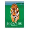 BENGAL TIGER - Wildlife - Educational Board