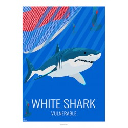 GREAT WHITE SHARK - Wild Animal - Educational Board - Poster Retro Vintage - Art Gallery - Deco