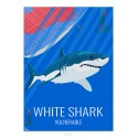GREAT WHITE SHARK - Wildife - Educational Board