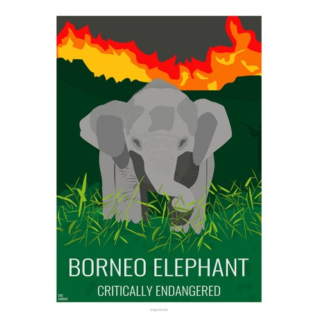 BORNEO ELEPHANT - Wild Animal - Educational Board - Poster Retro Vintage - Art Gallery - Deco