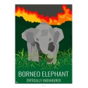 BORNEO ELEPHANT - Wildlife - Educational Board