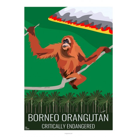 BORNEO ORANG OUTANG - Wild Animal - Educational Board - Poster Retro Vintage - Art Gallery - Deco