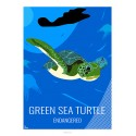 GREEN TURTLE - Wildlife - Educational Board
