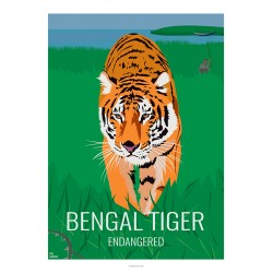 BENGAL TIGER - Wild Animal - Educational Board - Poster Retro Vintage - Art Gallery - Deco